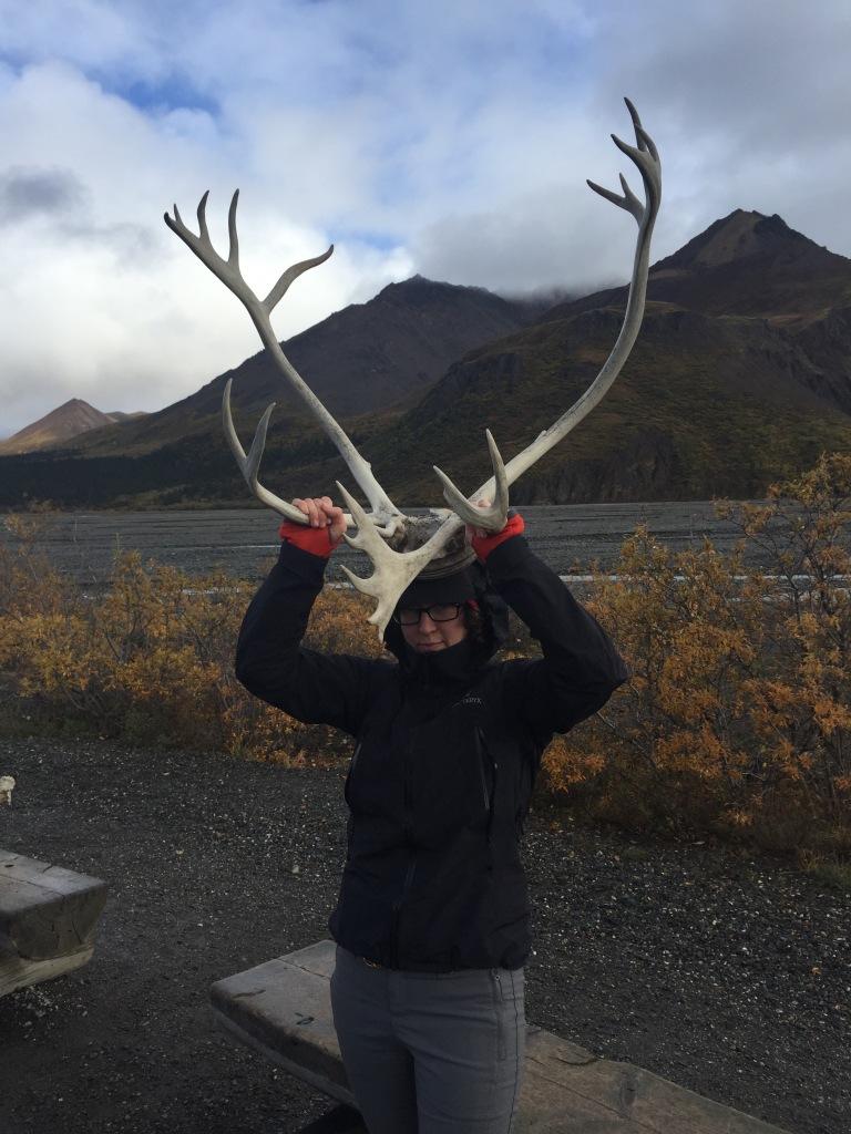 caribou head